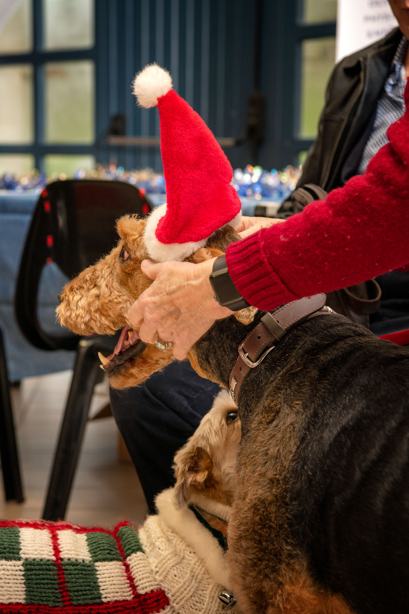 Le Noël des chiens