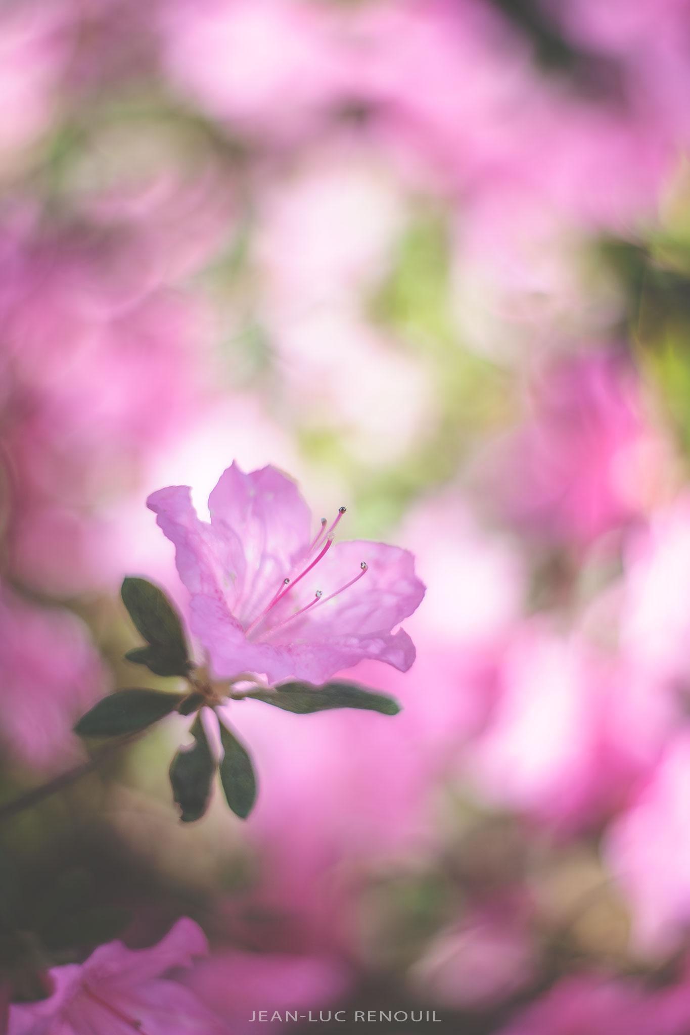Jardin au printemps